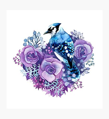 Blue Jay and Violet Flowers Watercolor  Photographic Print