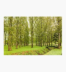 Rows of trees and bridge in park Photographic Print