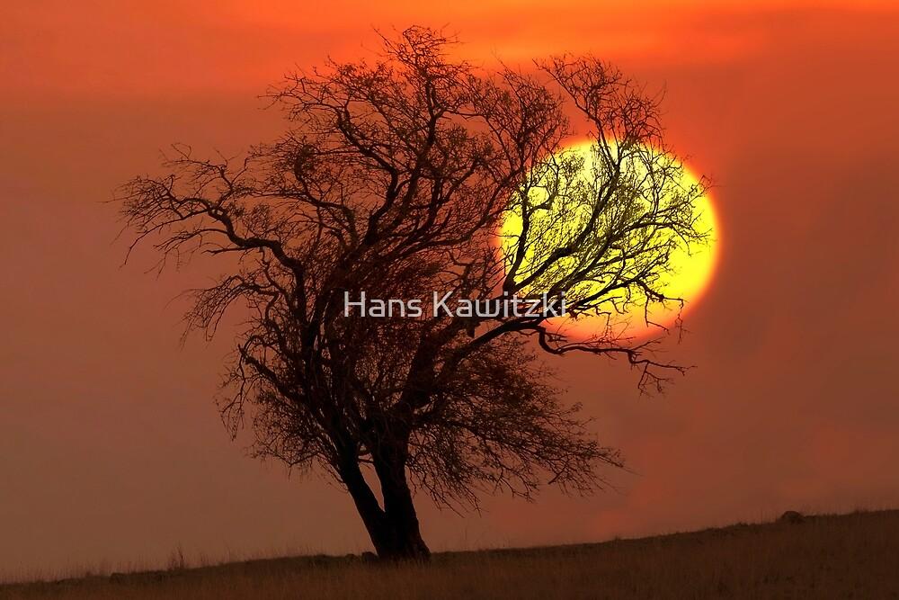 1474 Reaching for the Sun by Hans Kawitzki