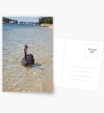 Black Swan Postcards