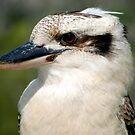Kookaburra - Australia by Mette  Spange