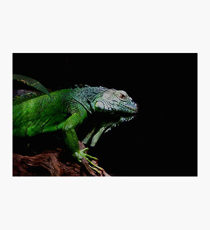 Little Dinosaur Photographic Print