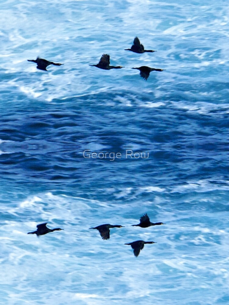Cormorants  Skimming the Waves off Inishmore by VeryIreland