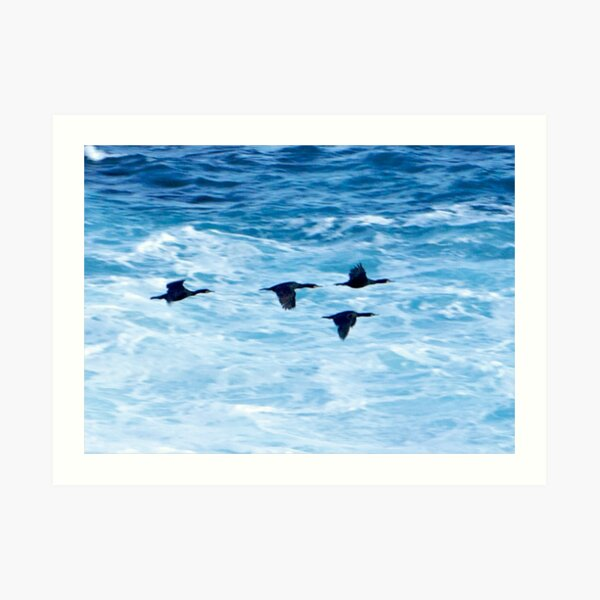 Cormorants  Skimming the Waves off Inishmore Art Print