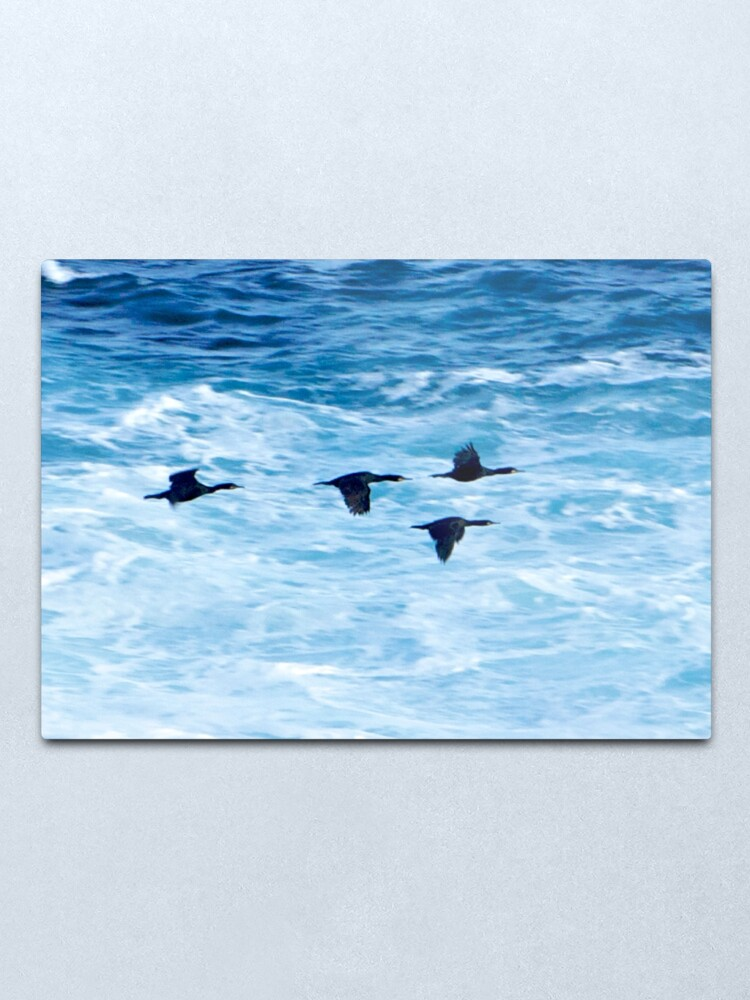 Alternate view of Cormorants  Skimming the Waves off Inishmore Metal Print