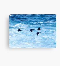 Cormorants  Skimming the Waves off Inishmore Canvas Print