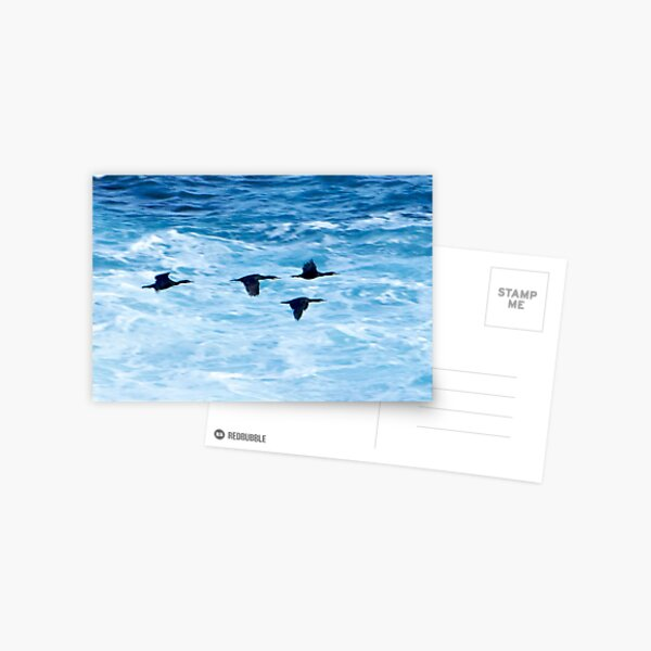 Cormorants  Skimming the Waves off Inishmore Postcard