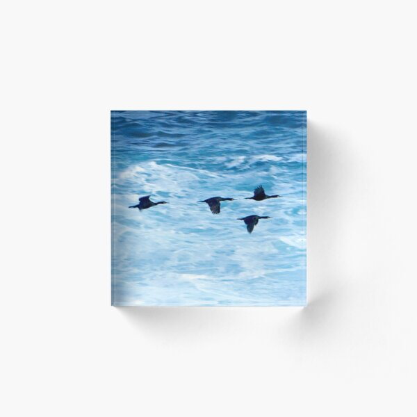 Cormorants  Skimming the Waves off Inishmore Acrylic Block