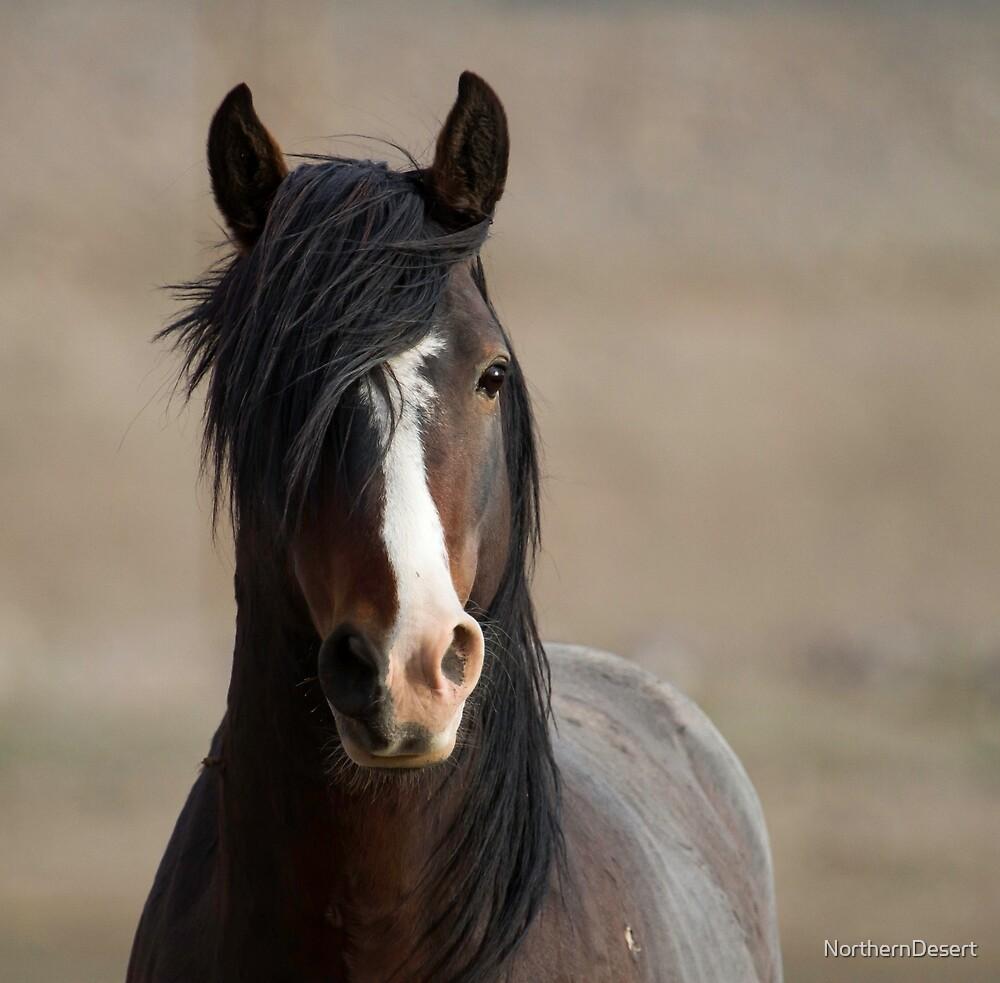 Curious Wild Stallion by NorthernDesert