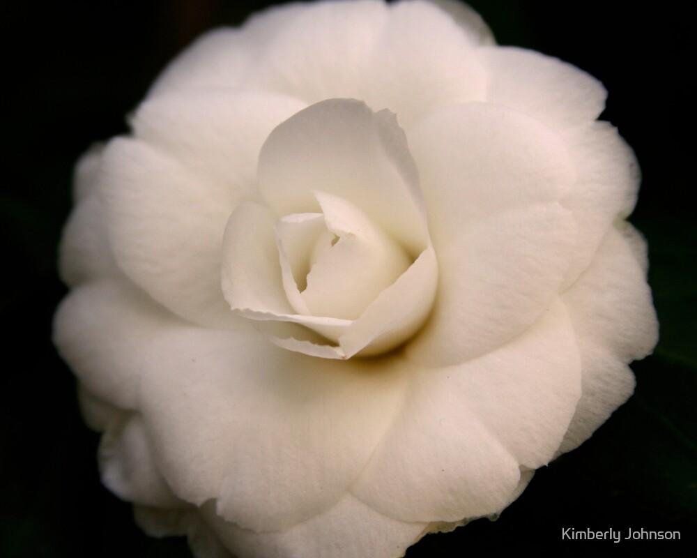 Ivory Camellia by Kimberly Johnson