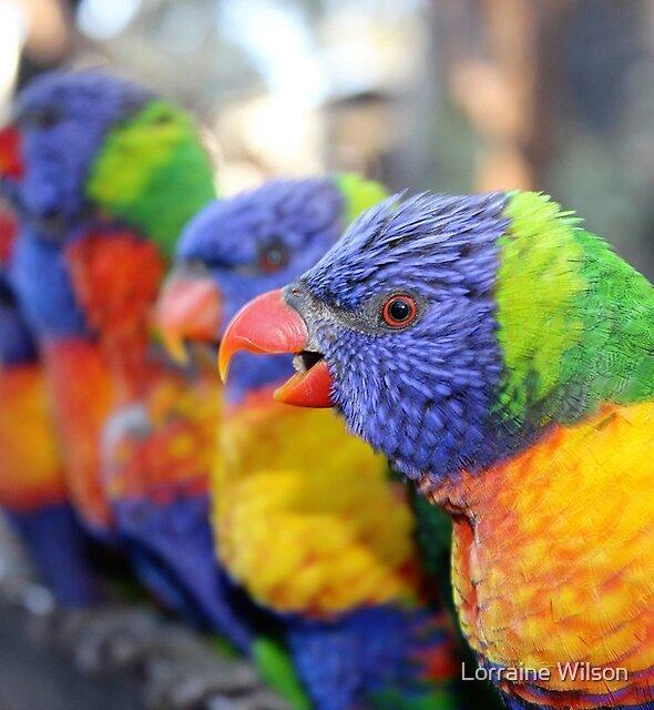 Australian Rainbow Lorikeets by Lorraine Wilson