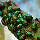 bug eyed by Mark Malinowski