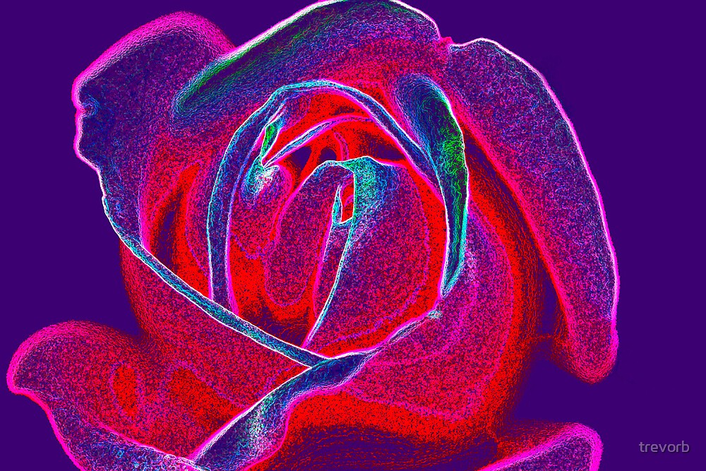 Rose. by trevorb