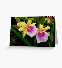 Gorgeous Miltonia Sunset Orchid Greeting Card