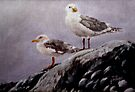 Resting Gulls by Jim Phillips