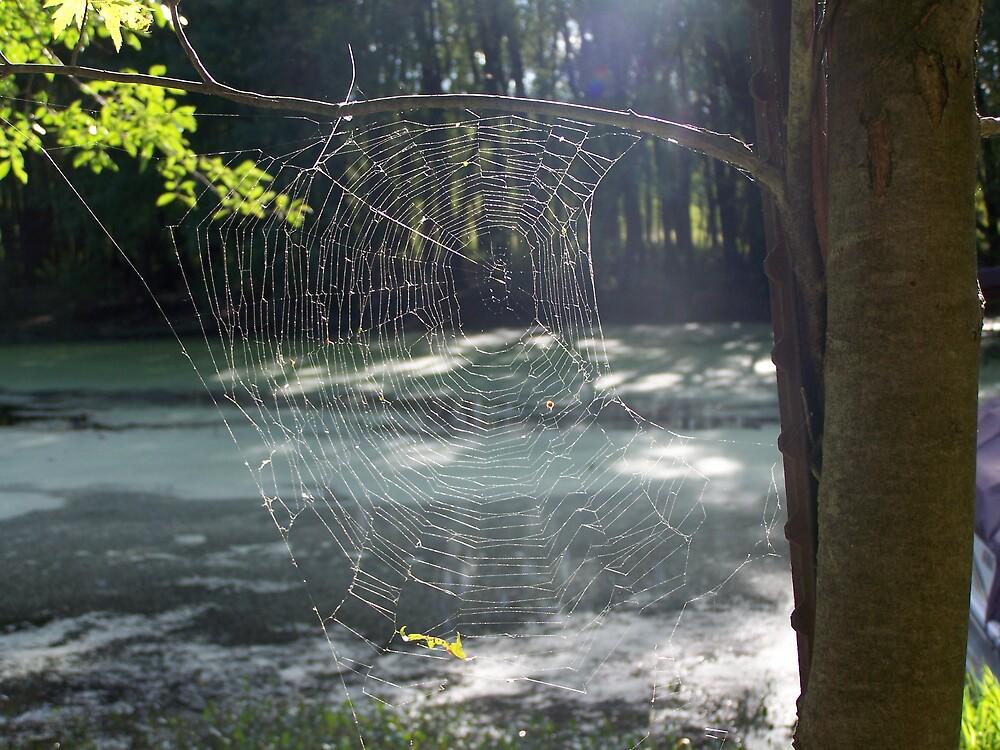 web by summersrain1969