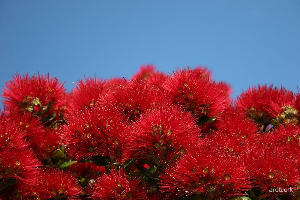 Pohutukawa Bloom by ardwork