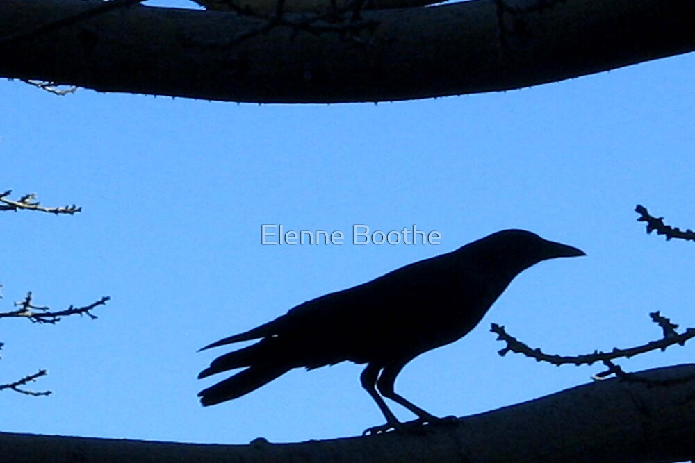 BLACK RAVEN by Elenne Boothe