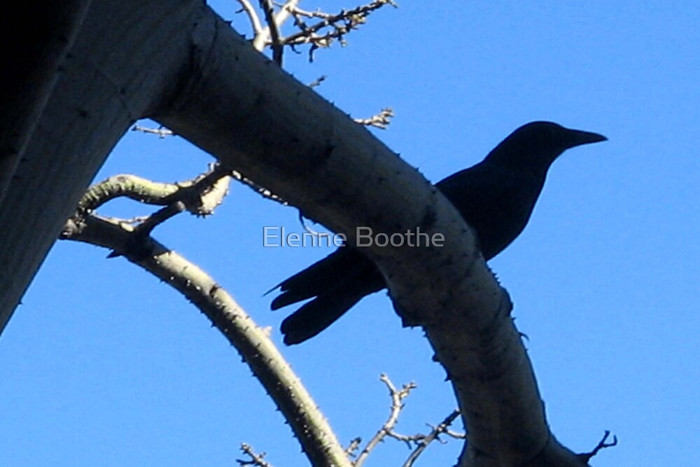 WATCHING by Elenne Boothe
