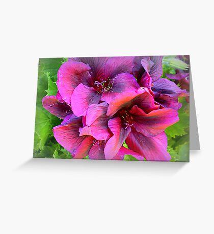 Pelargonium - Purple shade Greeting Card