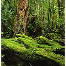 Enchanted Forrest - Tasmania by MakRo