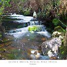 Secret Brook - Tasmania by MakRo