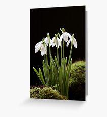 Snowdrop Flowers Grußkarte
