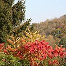 Autumn colour in Shropshire by Sue Hammond
