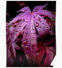 West Coast Gardens: Lingering Rain Poster