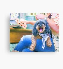 """Lap Dog"" Canvas Print"
