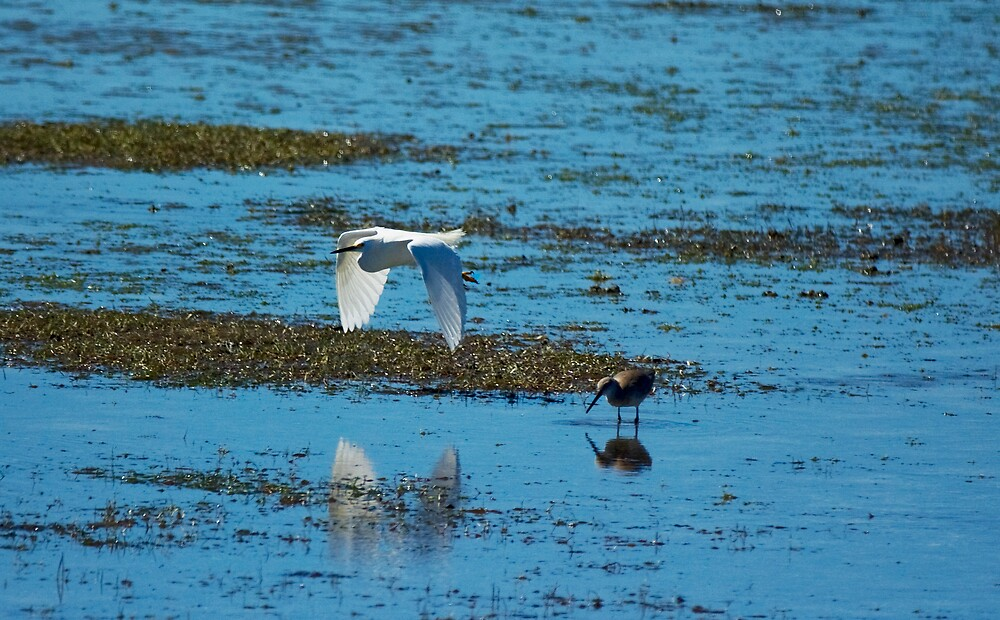 Egret & Sandpiper by Michael Wolf