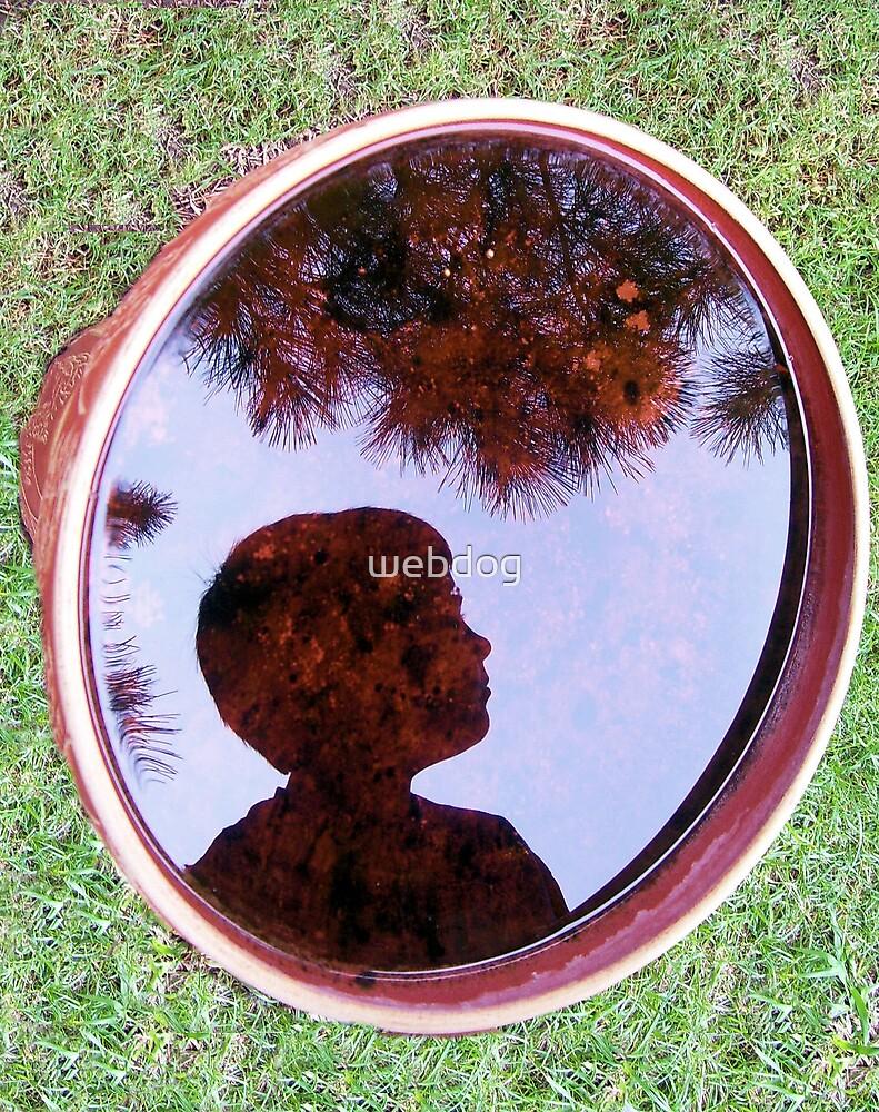 BIRD BATH REFLECTION by webdog