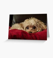 Cute Puppy Dog Greeting Card