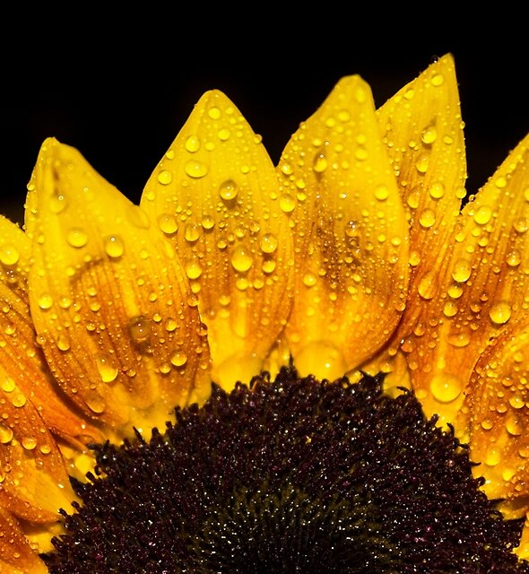 Happiness is Yellow by John Velocci