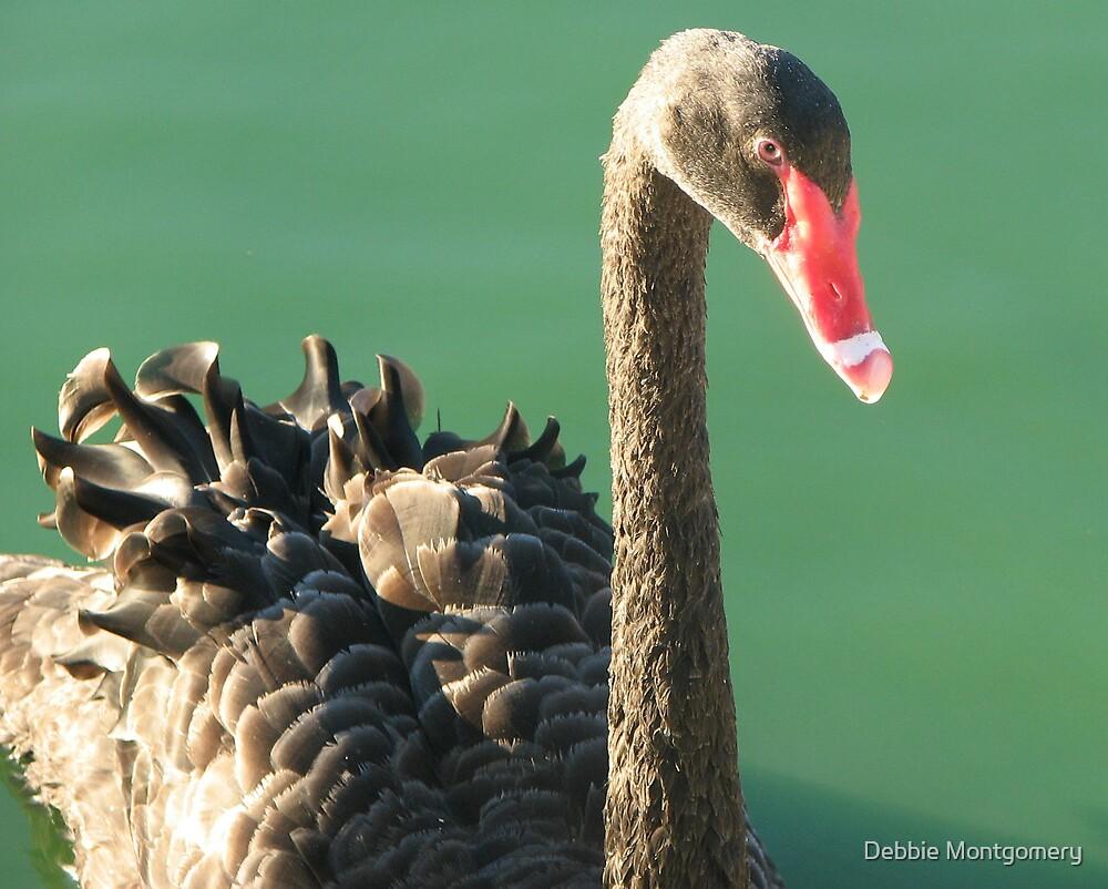 Black Swan by Debbie Montgomery