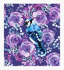 Blue Jay and Violet Anemones Photographic Print