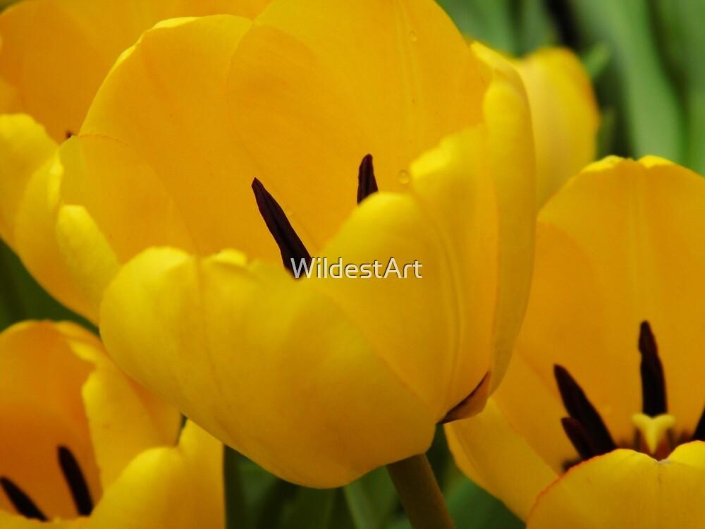 Three Tulips by WildestArt