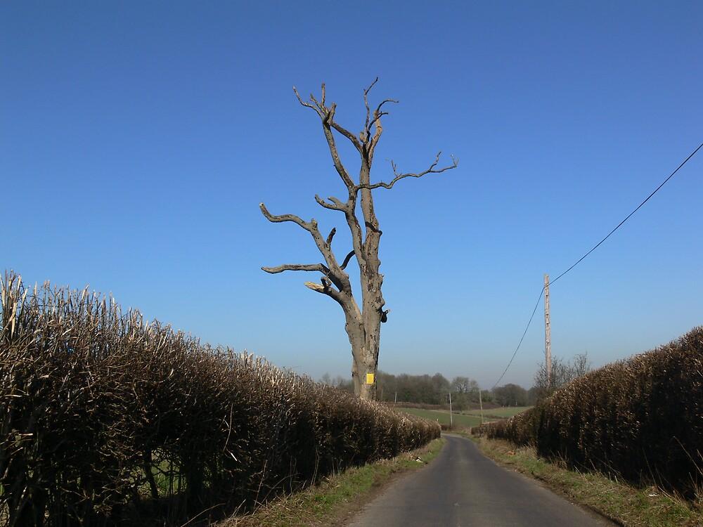 Dead wood by ShepS