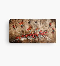 Carmine Bee-eaters Metal Print