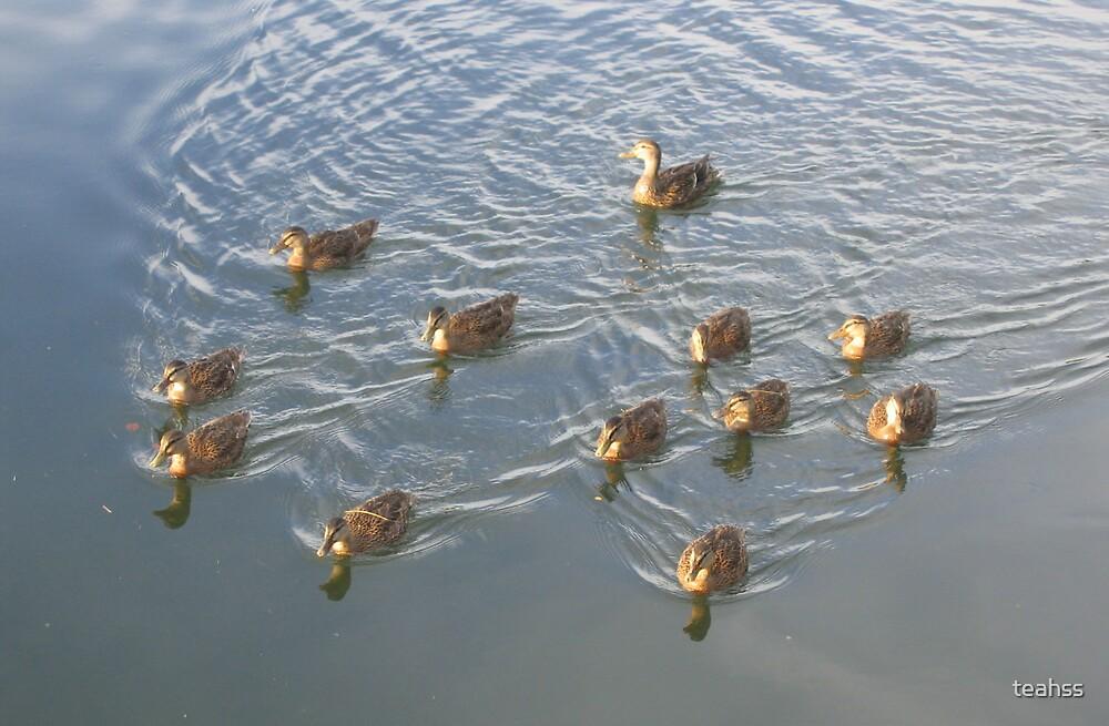 Ducks by teahss