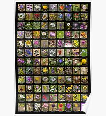 2017 Spring Arizona Wildflowers Poster