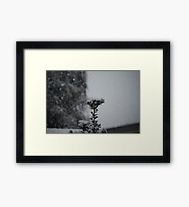 Snow Holly Framed Print