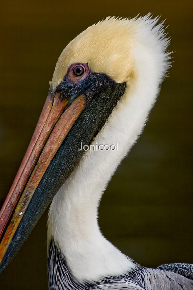 Pelican Close-up by Jonicool