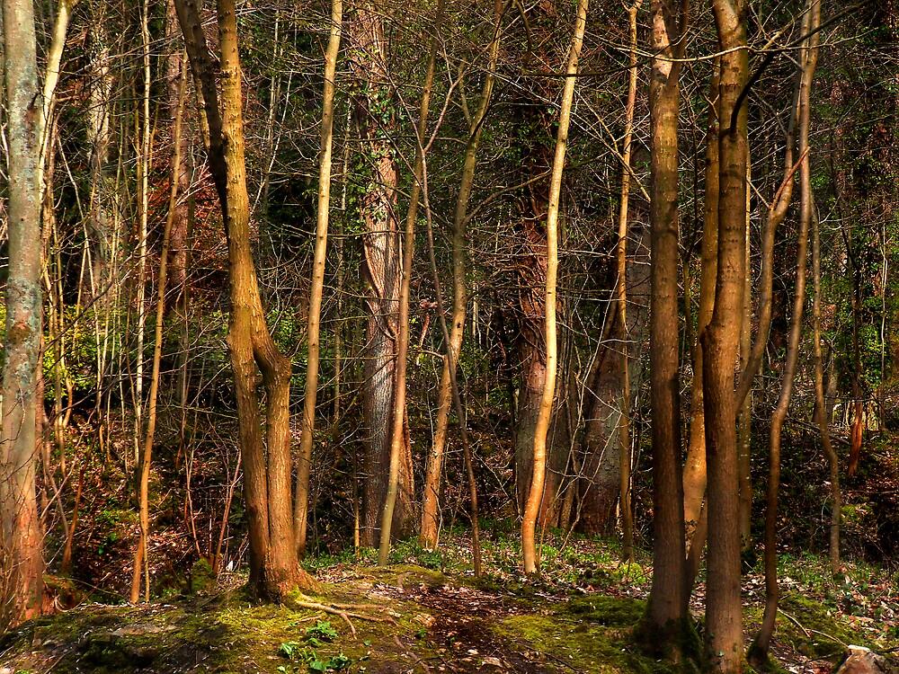 Welsh woodland by Bev Evans