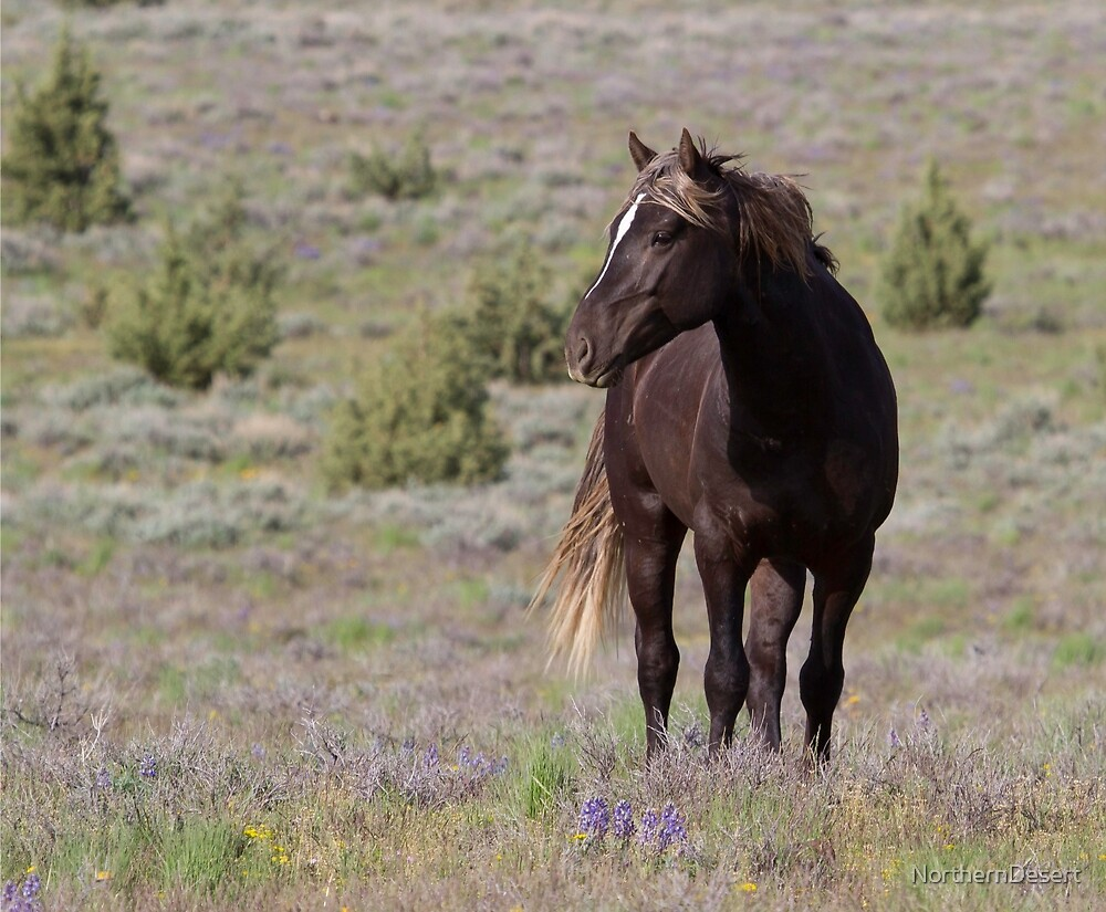 Steens Mountain Stallion by NorthernDesert