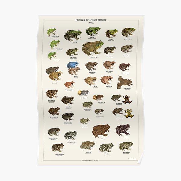 Frösche und Kröten von Europa Poster