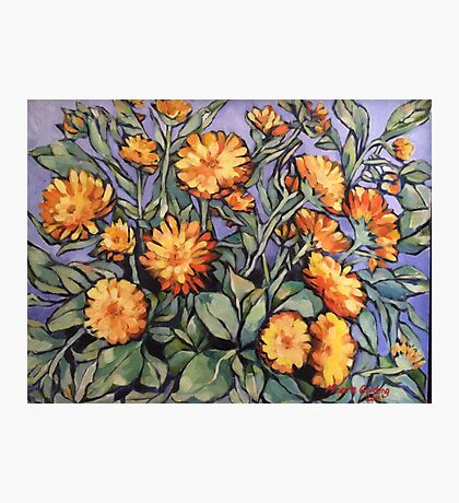 "Evening sunshine (marigolds). Oil on linen on board 16x14"" Photographic Print"