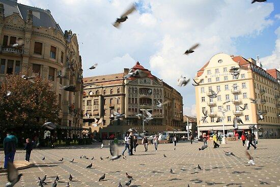 Plenty of birds at the Hotel Timisoara by ellismorleyphto