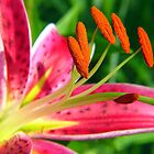 red  spotted oriental lily by LoreLeft27
