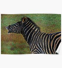 Snorting Zebra - Coloured Pencil Poster